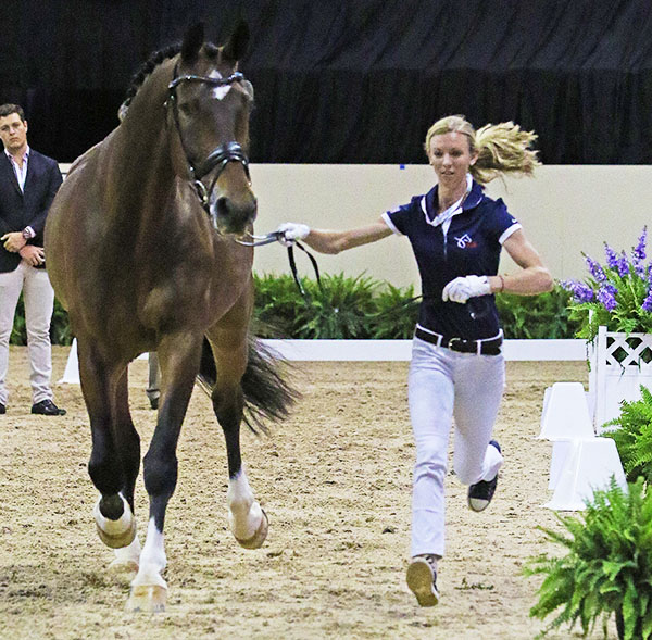 Laura Graves and Verdades at the veterinary check at the World Cup Final. © 2015 Ken Braddick/dressage-news.com