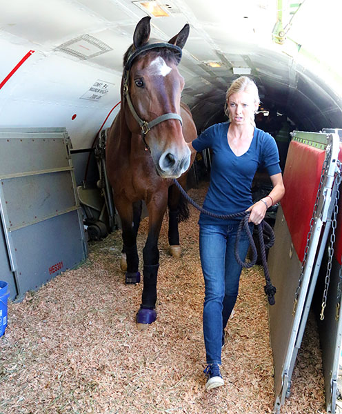 Laura Graves leading Verdades off the aircraft that carried them from Palm Beach, Florida to Las Vegas for the World Cup Final. © 2015 Ken Braddick/dressage-news.com