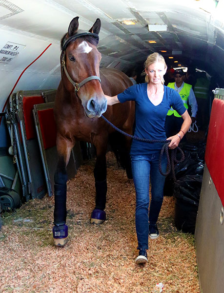 Verdades with owner-rider Laura Graves arriving in Las Vegas for the pair's first World Cup Final appearance. © 2015 Ken Braddick/dressage-news.com