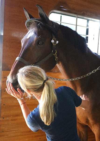 Verdades getting a sweet treat from Laura. © 2015 Ken Braddick/dressage-news.com