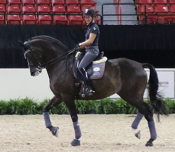 Mikala Gundersen, the Florida-based Danish team rider, on My Lady preparing for their second successive World Cup Final. © 2015 Ken Braddick/dressage-news.com