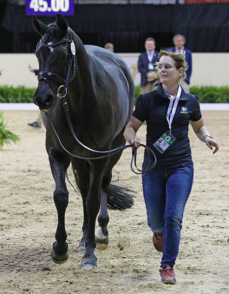 Malin Hamilton comoeted Fleetwood on Sweden's team at the 2013 European Championships and are making their debut at a World Cup Final. © 2015 Ken Braddick/dressage-news.com