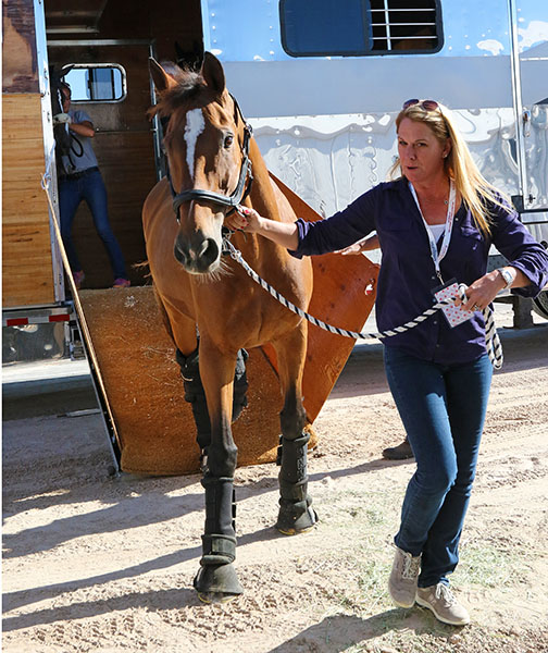 Mariett was happy to see a familiar face when she arrived at the Thomas & Mack Center where the World will be staged--Melissa Taylor, wife of rider Lars Petersen, was there to take care of her along with Marcia Pepper the owner who had prepared Martiett's stall. © 2015 Ken Braddick/dressage-news.com