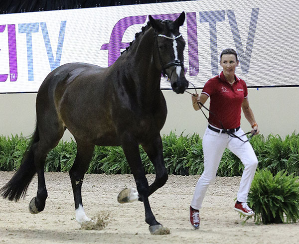 Mikala Gundersen, a Danish rider resident in Florida for the past decade, with My Lady, a Danish Warmblood mare bought by Janne Rumbough, born in Denmark but a U.S. citizen and whose support of dressage in Florida for many years has seen it flourish into a world center. © 2015 Ken Braddick/dressage-news.com
