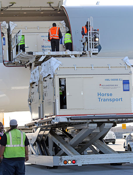 The first containers of horses being unloaded from the Qatar Boeing 777 after arriving in Las Vegas from Europe for the World Cup Finals. © 2015 Ken Braddick/dressage-news.com