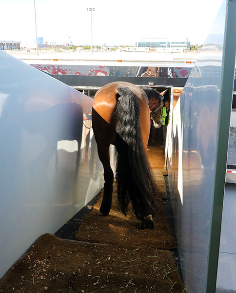 Verdades has no problem with the exit ramp from the aircraft. © 2015 Ken Braddick/dressage-news.com