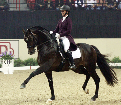 9yo stallion Sanceo, with Sabine Shut Kerry, finds his stride in front of 7500 spectators