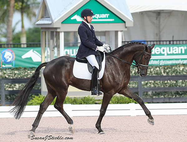 Endel Ots Could Ride Two Mounts for USA at World Young Horse Championships