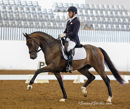 Samhitas is one of two horses being competed by Endel Ots in the World Young Horse Championships that will be seen live in Germany but not in the rest of the world including his homeland, the United States. © 2015 SusanJStickle.com