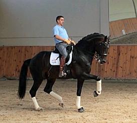 Sandrinnerhall being ridden by Antonio Diaz Porras at his Madrid training center.