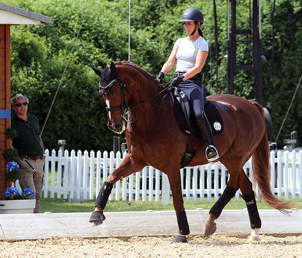 Kasey Perry on Scarlet that she will compete in the Grand with new coach Juan Matute keeping an eye on the pair. © 2015 Ken Braddick/dressage-news.com