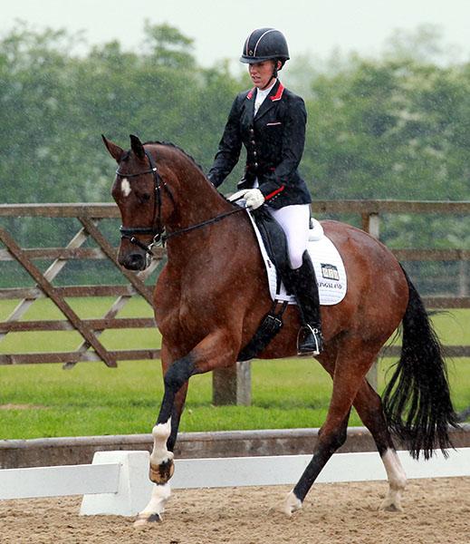 Quiana (Quaterback x Samba Hit), a four-year-old ridden by Charlotte Dujardin.