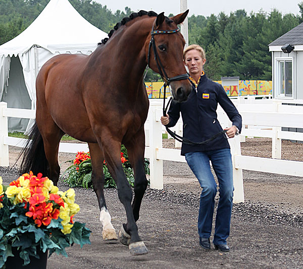 An Australian at the Pan American Games veterinary check--Kelly Layne with her Von Primaire that's being competed by Irina Moleiro de Muro for Venezuela. © 2015 Ken Braddick/dressage-news.com