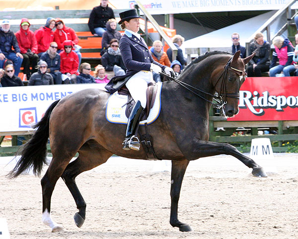 Tinne Vilehelmsson-Silfvén on Don Auriello competing at the Falsterbo Nations Cup. © 2015 Pelle Wedenmark for dressage-mews.com
