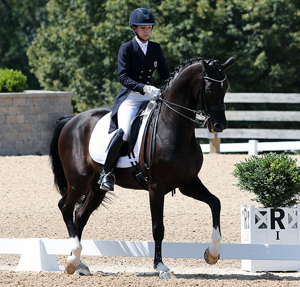 Chase Hickok on Sagacious HF in the Under-25 prep class for the U.S.championship.© 2015 Ken Braddick/dressage-news.com