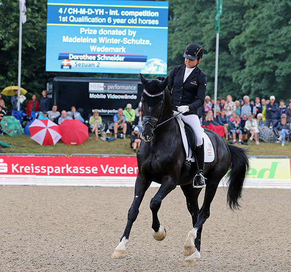 The Danish Warmblood stallion Sezuan being ridden by Dorothee Schneider in the Six-Year-Old World Championships qualifier. © 2015 Ken Braddick/dressage-news.com