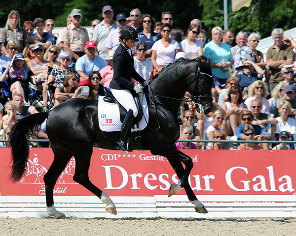 Sezuan with Dorothee Schneider aboard in canter that was awarded 10 in the World Six Year Old Championship. © 2015 Ken Braddick/dressage-news.com