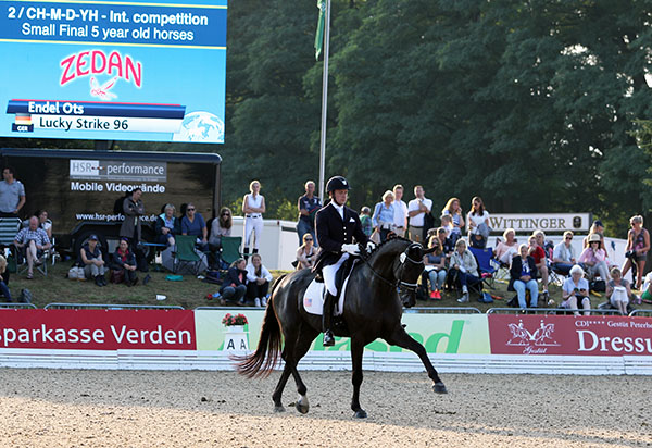 "Endel Ots on Lucky Strike in the five-year-old World Championships ""small"" final. © 2015 Ken Braddick/dressage-news.com"