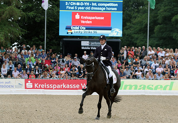 Endel Ots with Lucky Strike in the final of the World Young Horse Championships for five-year-olds. © 2015 Ken Braddick/dressage-news.com