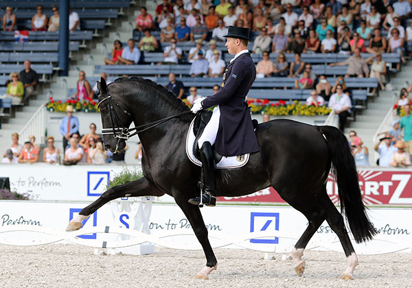 "Totilas ridden by Matthias Alexander Rath in the European Championships Grand Prix and showing the left hind where the cause of the horse's ""irregularity"" was found. © 2015 Ken Braddick/dressage-news.com"