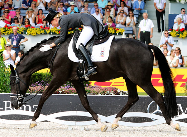 "Painted Black, an oldie at 18 years of age, ridden by Morgan Barbancon Mestre produced yet another result that helped to qualify Spain for the 2016 Olympics in Rio. This comes seven years after Anky van Grunsven, the Queen of the Freestyle, competed ""Painted"" in a World Cup Final. © 2015 Ken Braddick/dressage-news.com"