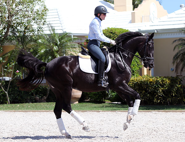 Here my BAD right foot is clearly evident, although Sauvignon looks wonderful. © 2015 Ken Braddick/dressage-news.com