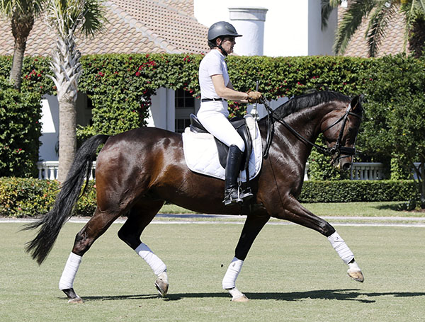 If you saw this horse going around the hunter ring, you too would likely pause and wonder if he were in the wrong arena. © 2015 Ken Braddick/dressage-news.com