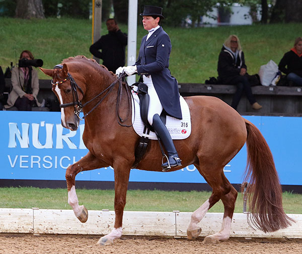 Herzruf's Erbe ridden by Ulla Salzgeber at Munich in May this year, the Rhinelander gelding's last competition. © 2015 Ken Braddick/dressage-news.com