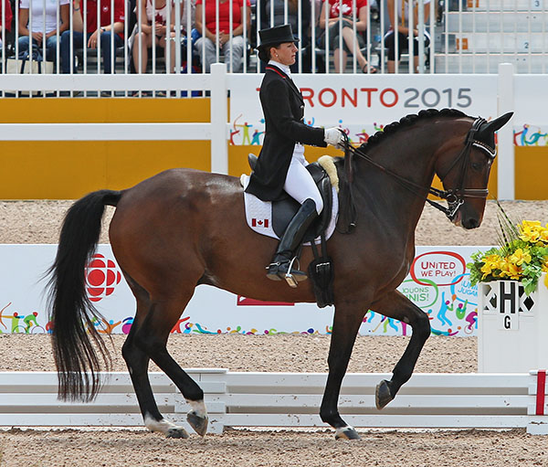 Belinda Trussell on Anton at the Pan American Games qualifying Canada for an individual start at the 2016 Olympics. © 2015 Ken Braddick/dressage-news.com