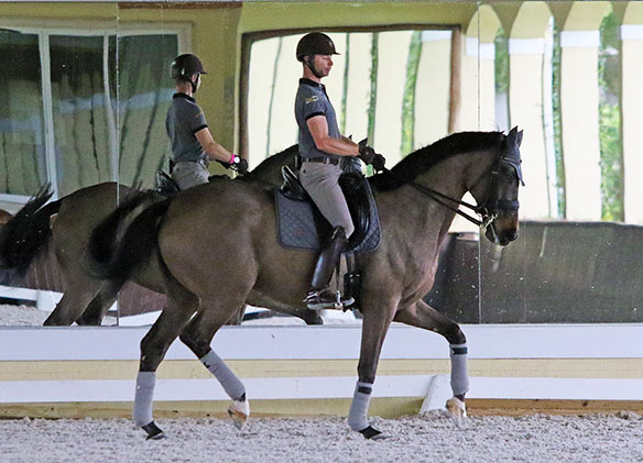 Nicholas Fyffe working Lumberjack in preparation for the first competition for the pair with the goal of seeking a place on Australia's Olympic team. © 2016 Ken Braddick/dressage-news.com