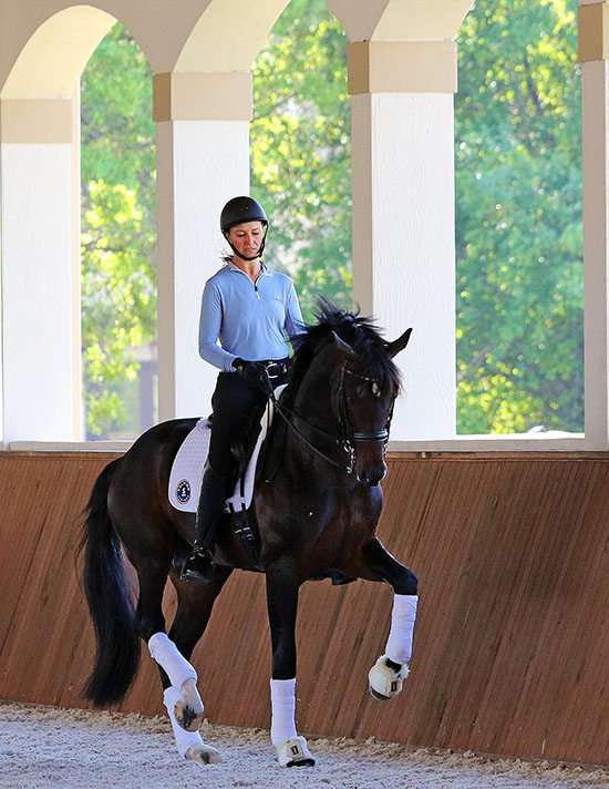 Adrienne Lyle working Salvino. © 2016 Ken Braddick/dressage-news.com