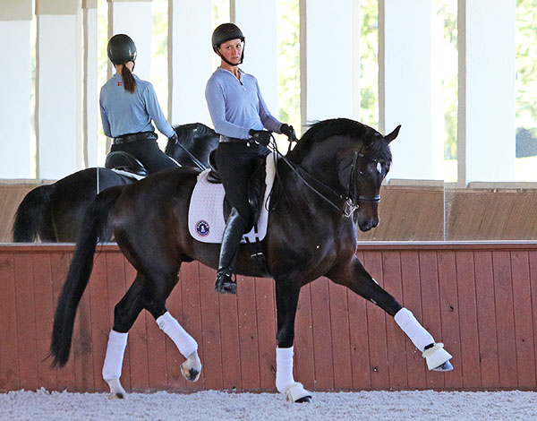 Adrienne Lyle and Salvino. © 2016 Ken Braddick/dressage-news.com