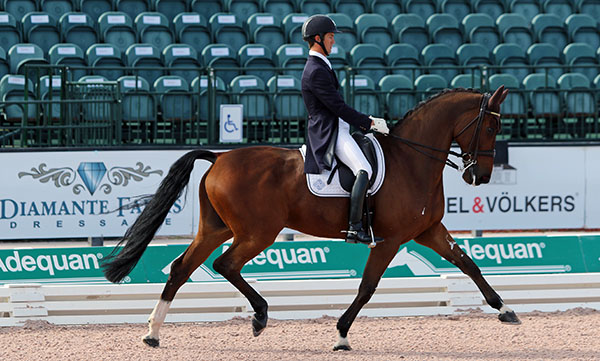 Chris von Martels on Divertimento that he is aiming to represent Canada t the Olympics. © 2016 Ken Braddick/dressage-news.com