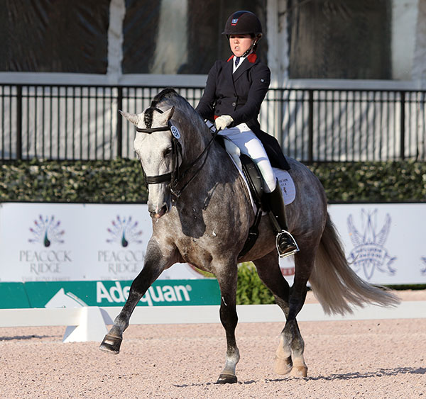 Kerrigan Gluch on Vaquero HGF. © 2016 Ken Braddick/dressage-news.com