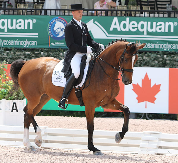 Lars Petersen on Mariett in the CDI3* Grand Prix Special, probably the last competition in Wellington for the 18-year-old Danish Warmblood mare. © 2016 Ken Braddick/dressage-news.com