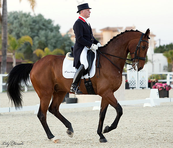 Richard Davison competing Bubblingh at Oliva Nova. © 2016 Lily Forado for dressage-news.com