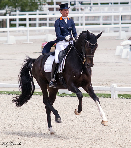 Adelinde Cornelissen in the CDI Grand Prix debut for Aqiedo, an 11-year-old KWPN stallion (Undigo x Metall). The pair placed fourth on 71.880 per cent. Adelinde has entered Jerich Parzival on which she was world No. 1 in the Nations Cup. © 2016 Lily Forado or dressage-news.com