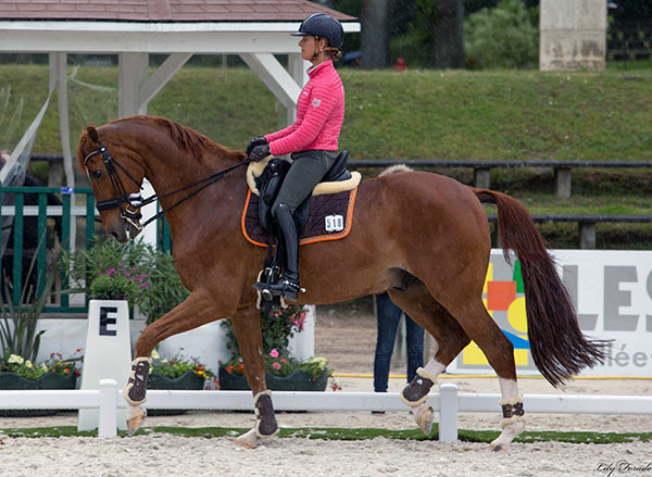 Certain to attract lots of attention in the Nations Cup, Adelinde Cornelissen on Jerich Parzival, the world's former No, 1 combination in their second CDI this year at the age of 19. © 2016 Lily Forado for dressage-news.com