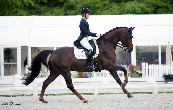 "Arlene ""Tuny"" Page riding Woodstock in the CDI3* Grand Prix. It was the first European outing for ""Tuny"" and Woodstock in The Dutta Corp. American Olympic team observation competitions. The pair placed 10th. © 2016 Lily Forado for dressage-news.com"