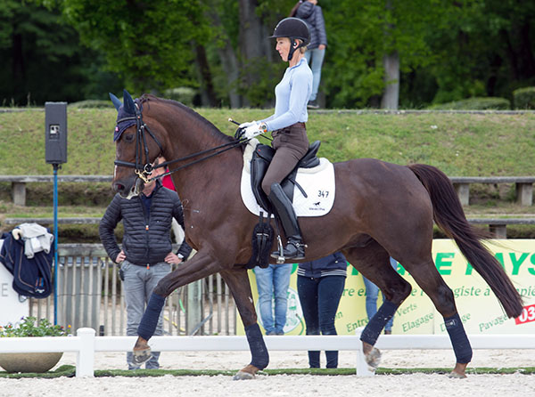 "Arlene ""Tuny"" Page working Woodstock at Compiègne. © 2016 Lily Forado for dressage-news.com"