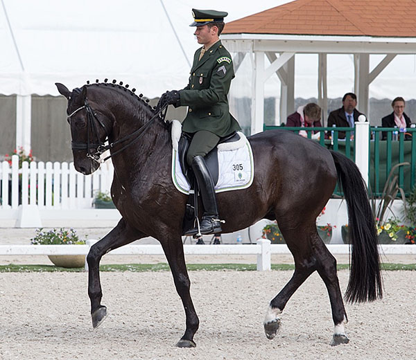 João Victor Marcari Oliva riding Haddington KHR, a 10-year-old Afghanistan-bred gelding that is one of three horses that he has obtained the scores to qualify to ride on Brazil's team at the Olympics in his homeland. © 2016 Lily Forado for dressage-news.com