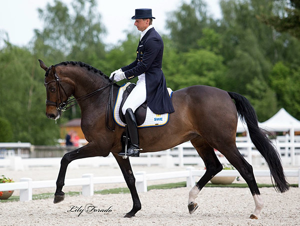 Patrik Kittel and Deja, the top finishing pair for Sweden in second place in the Nations Cup. © 2016 Lily Forado for dressage-news.com