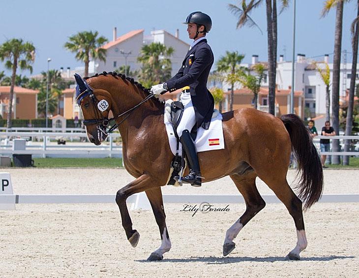 Juan Matute on Quantico Ymas at the Spanish Championships. © 2016 Liy Forado for dressage-news.com
