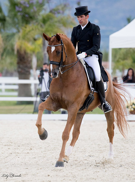 Severo Jurado López on Lorenzo, reserve Spanish Champions. © 2016 Lily Forado for dressage-news.com