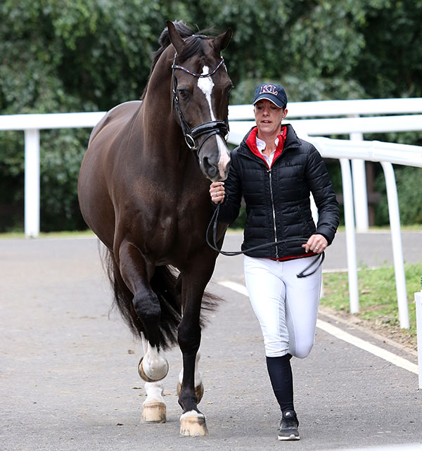 Valegro led by Charlotte Dujardin coming toward judges and the official veterinarian at the horse inspection for the Hartpury Dressage Festival CDI3* in England this week. © 2016 Ken Braddick/dressage-news.com