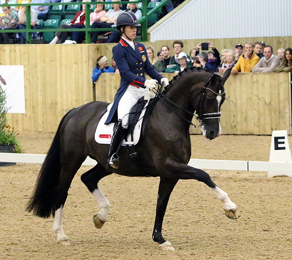Charlotte Dujardin riding Valegro to new Freestyle for Rio Olympics with composer Tom Hunt (in which sweater) and coach Carl Hester (in yellow jacket) looking on at Hartpury CDI3*. © 2016 Ken Braddick/dressage-news.com