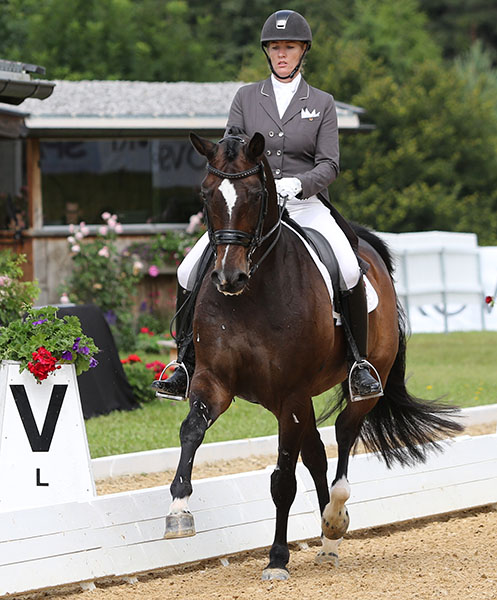 Karen Pavicic and Don Daiquiri competing in Europe seeking an individual start for Canada at the Olympics. © 2016 Ken Braddick/dressage-news.com