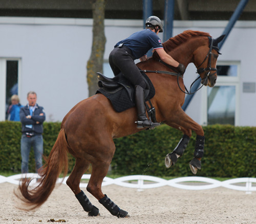 Michael Eilberg and Woodlander Farouche feeling fit and feisty © Ilse Schwarz/dressage-news.com
