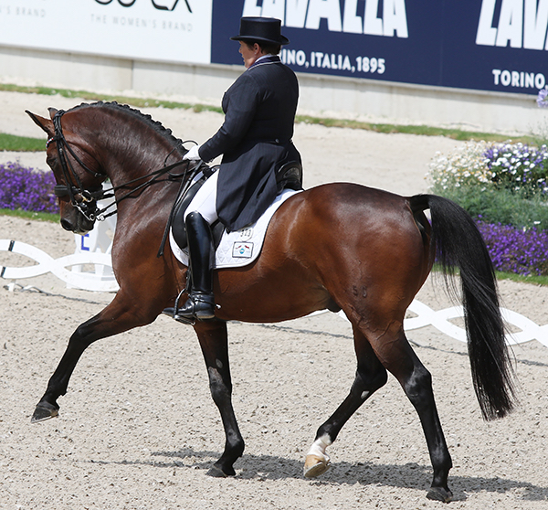 Shelly Francis on Doktor in the Nations Cup Grand Prix. Ilse Schwarz/dressage-news.com