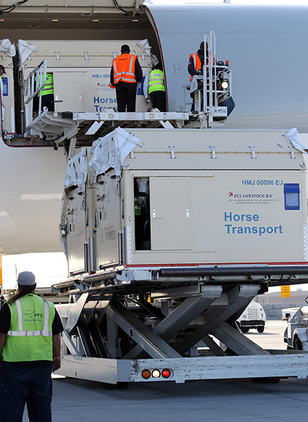 Containers of horses arriving at a major international event, similar to transportation of horses for the Olympic and Paralympic Games in Rio de Janeiro. © Ken Braddick/dressage-news.com